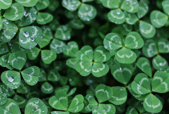 Clover Finance or Clever Finance?