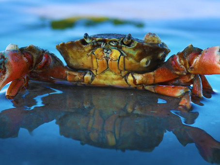 Annual Events Near Tallahassee: The Panacea Blue Crab Festival