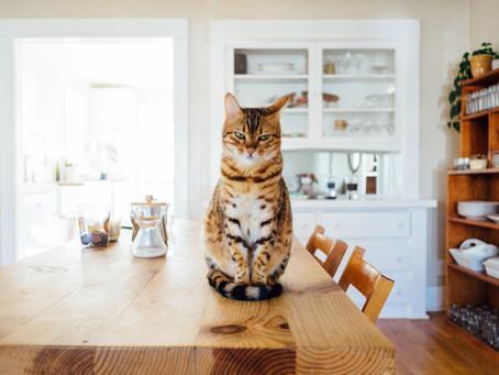 Za zdravje mačk gre
