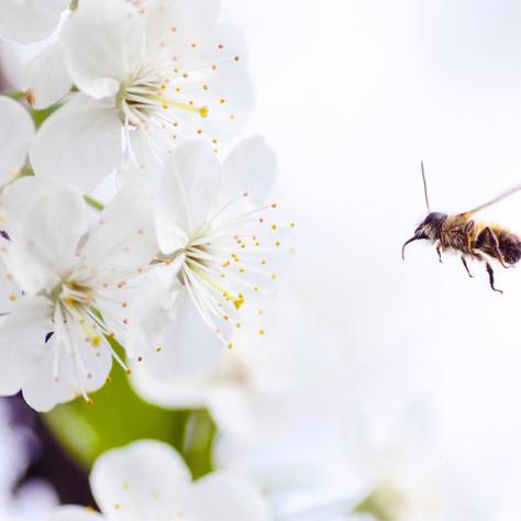 Bhramari Pranayama - Heiterkeit durch Bienensummen
