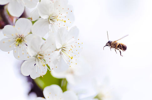 bee control and be removal
