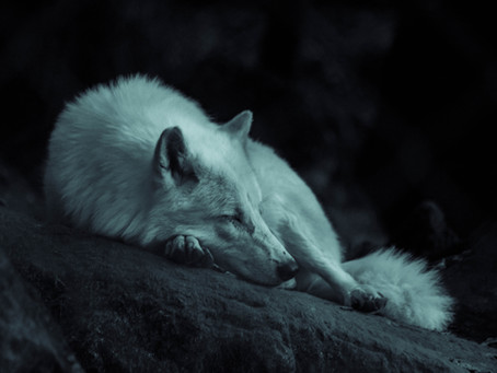Don't Cry Wolf! | As I Learn With Gal Ezra