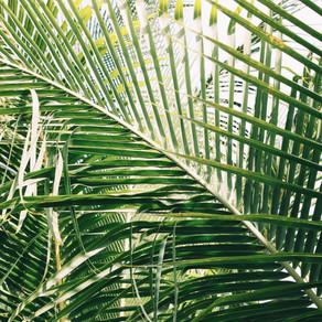 Palm/Passion Sunday (3/28/2021)