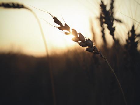 Grace Amid Unfaithfulness