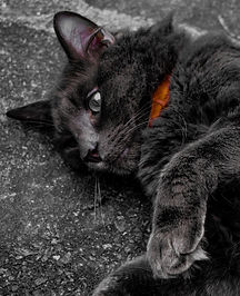 Shimmer Pet Care - Service