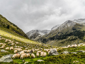 A Beginners Guide to Sheep & Lamb Farming
