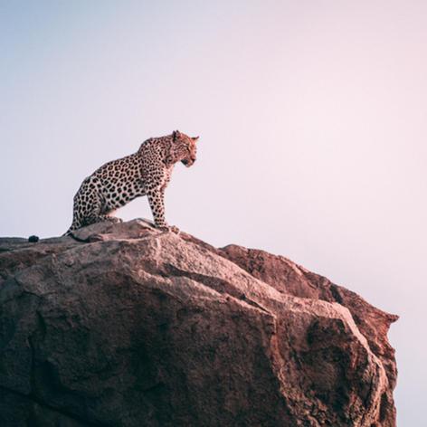 Safari Destinations