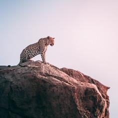 Leopard on Greater Kuduland Safaris
