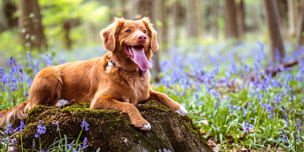 Sunday Dog Hiking Meet-Up
