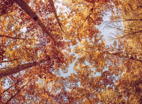 Slow Down and Savor the Season of Fall