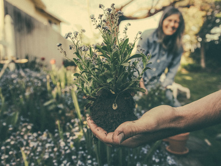 7 Tips to Avoid Aches and Pains While Gardening
