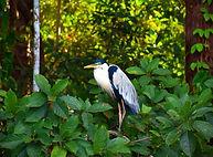 Tambopata National Park
