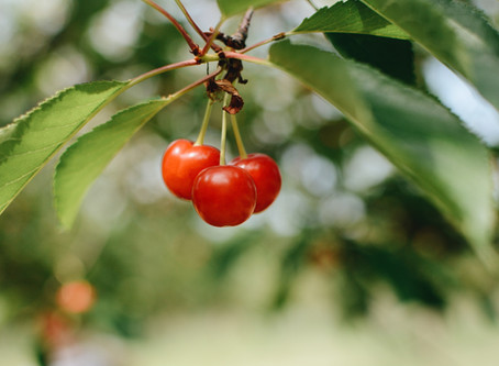 Tart Cherry, The Fruit You Didn't Know You Needed