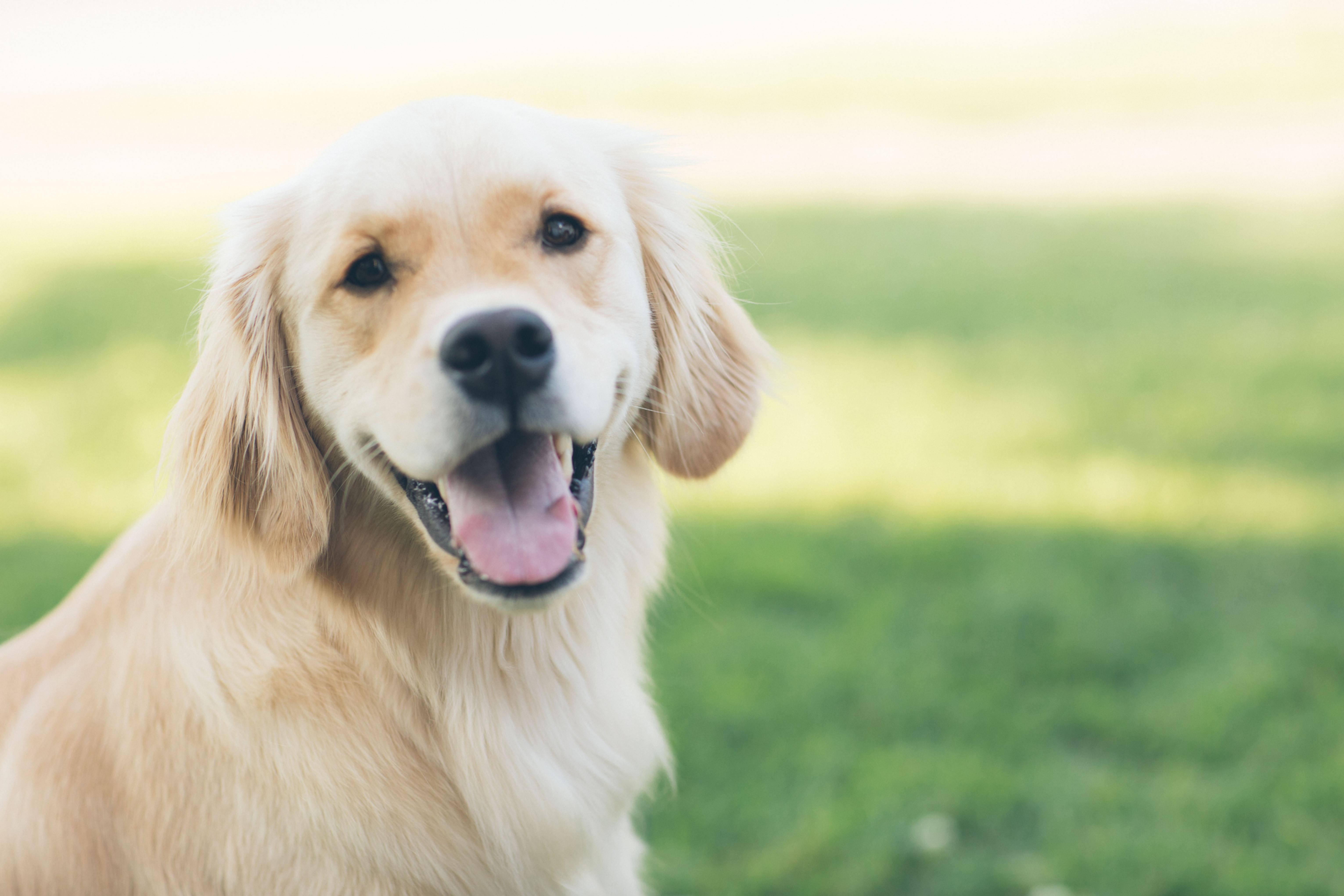 Dog Behaviour Management