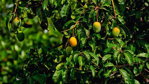 Image by Rajendra Biswal