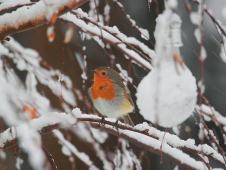 How to Create a Wildlife Winter Wonderland