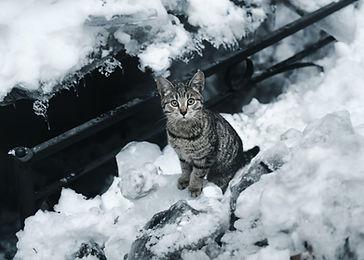Image by Viktor Mogilat