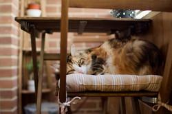 Seat Cushions & Chair Pads