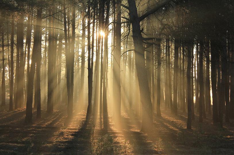 ecological sustainable native woodland