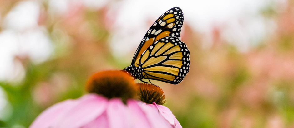 Creating Your Own Butterfly Effect