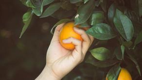 Go and Bear Fruit...
