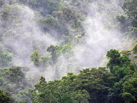 O clima, a Amazônia e Ailton Krenak