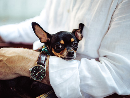 Why Invest in the Pet Insurance Industry?