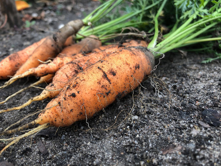 Taproot – the word describes its importance!