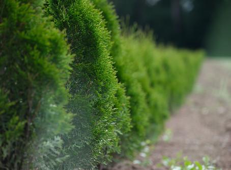 Picking the Best Hedge Trimmer for Overgrown Pesky Hedges