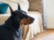 Denton Positive Dog Trainer