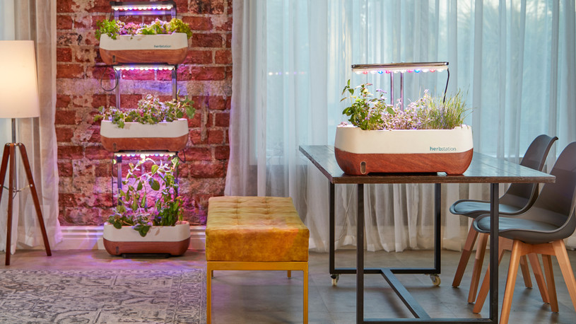 Create an Indoor Vertical Garden
