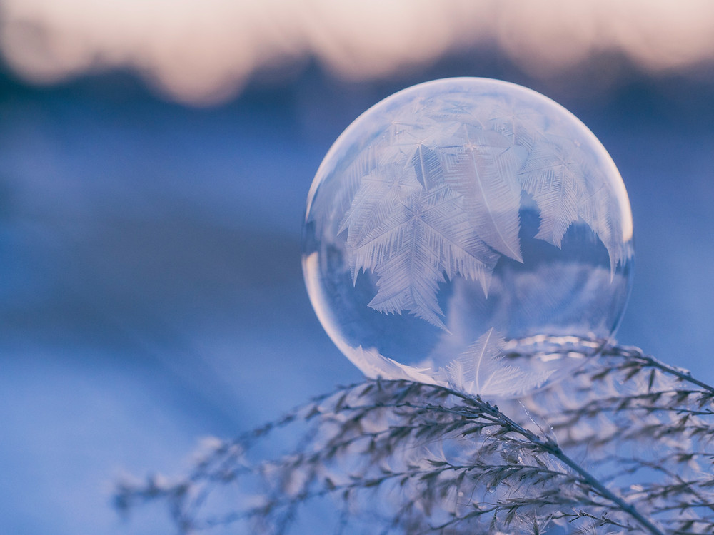 ice bubble on leaf cold weather
