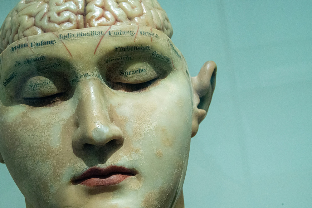 A photo of a clay head. It shows the face with the brain exposed at the top. The eyes are closed. There is unreadable writing around the top of the skull.
