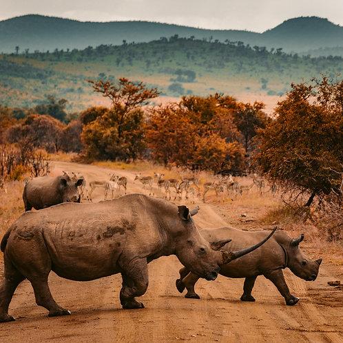 Kenia+Tanzania: Apartado