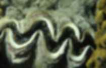 Image by NOAA