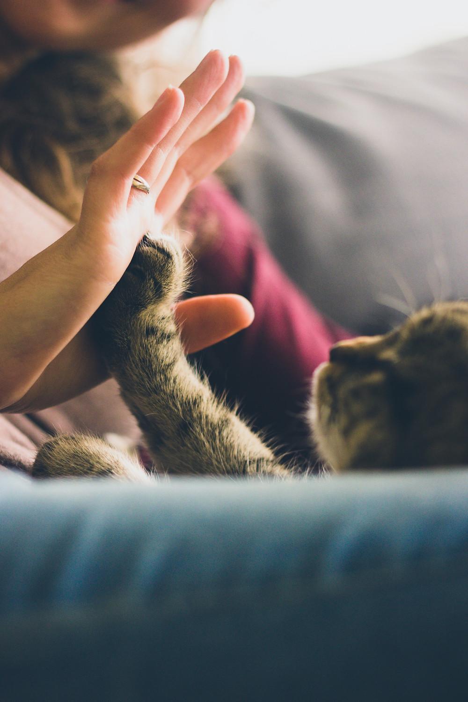Chats et chatons à l'adoption à l'association Cat's Garfield