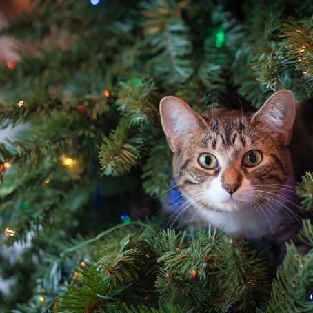 Navidad y tu gato