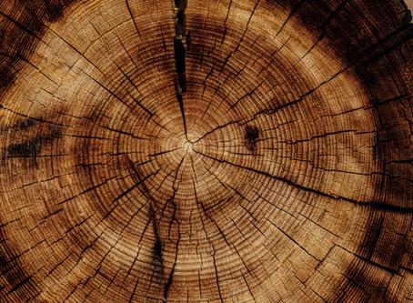 Five Elements - wood