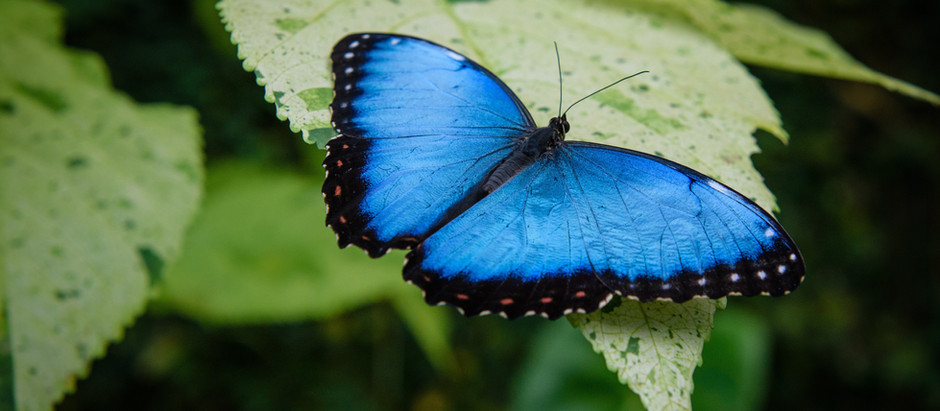 Butterfly Art Of Transformation. Air Breathing Freedom Of Thought Creativity Inspiration The Balance