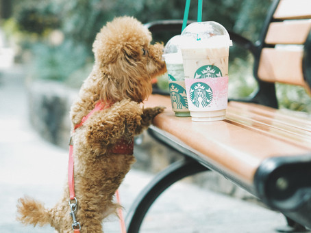 Ways to Celebrate Doggy Date Night On The Space Coast