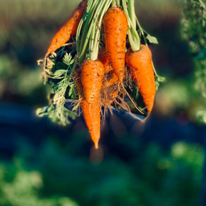 The Carrots on Lakeside Lane by Jeff Harvey