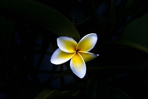 Hawaiian Trinity Reiki - Unconditional Love, Serenity, Clarity, Sacred Alignment