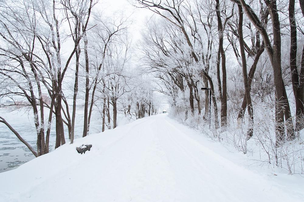 winter running trail