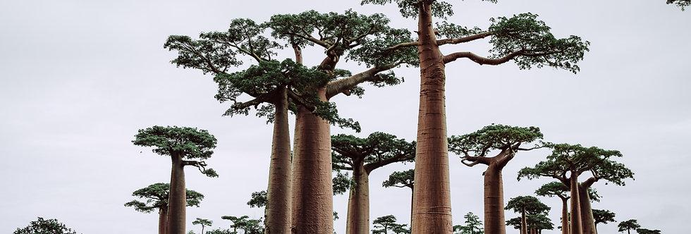 Madagascar: Pago de Inscripción