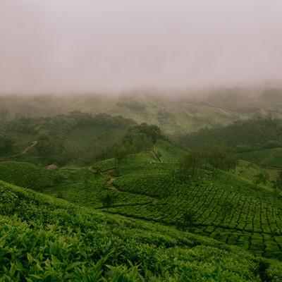 Pu'er Tea from 6 Major Tea Mountain