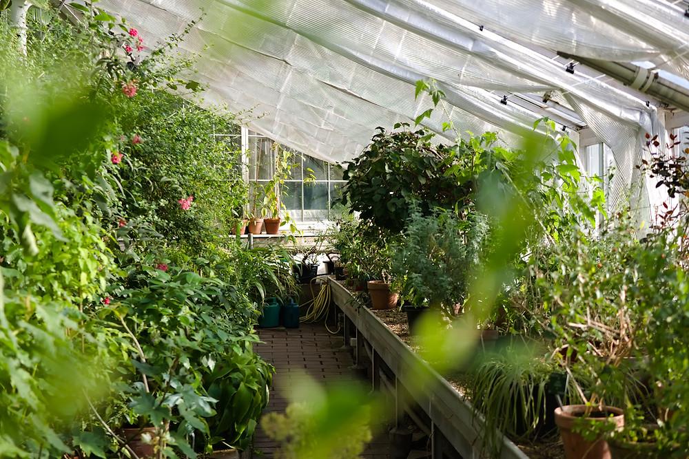 des plantes en pleines santé dans une serre