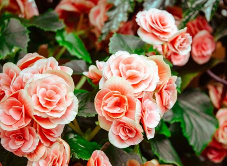 Flor Box OXO   Edible Flowers   Top 6 Edible Flowers
