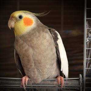 Birdie Basics