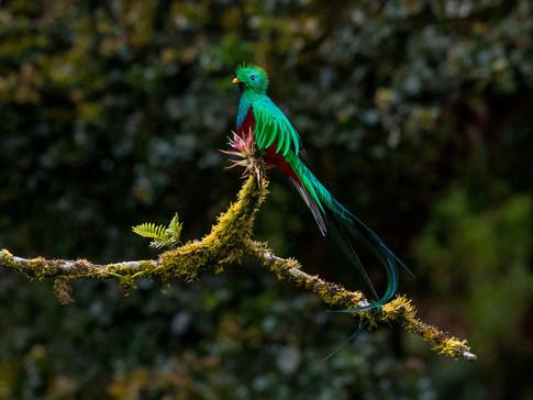 WhatsApp y Facebook como herramientas principales de traficantes ilegales de aves en Mérida