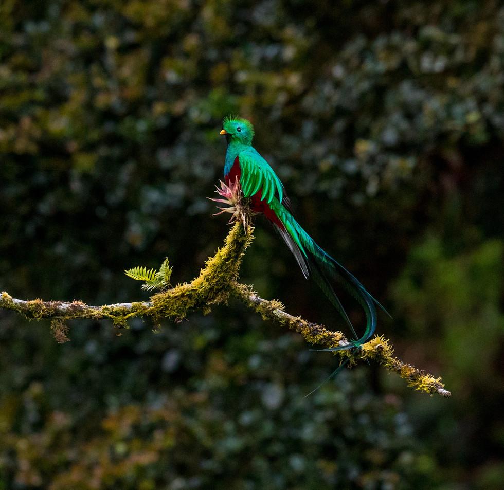 Quetzal, photo de Zdeněk Macháček